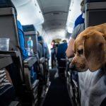 Как летать с животными, чтобы все прошло хорошо