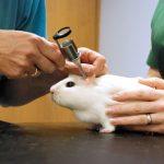 Ратолог – это ветеринарный врач, специализирующийся на диагностике и лечении болезней грызунов.